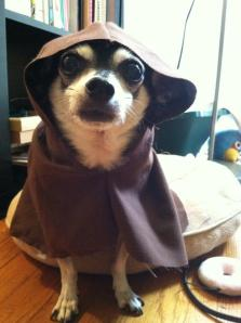 Jedi, Star Wars, Chihuahua, Star Wars Chihuahua, Rocko, Dog